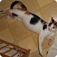 Adopt A Pet :: Foxy Lady - Chattanooga, TN