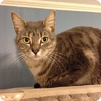 Adopt A Pet :: A..  Hollie - Charlotte, NC