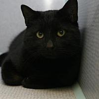 Adopt A Pet :: Jacob - Temple, PA