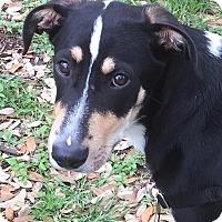 Adopt A Pet :: Reggie - Austin, TX