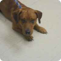 Adopt A Pet :: Bandit - Gulfport, MS