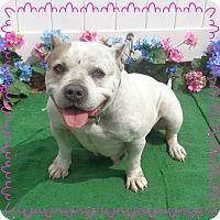 Adopt A Pet :: LYDIA - availalbe 3/28 - Marietta, GA