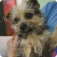 Adopt A Pet :: Sinclair - Athens, AL