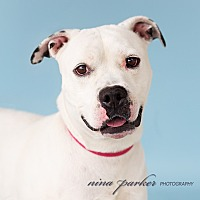 Adopt A Pet :: Stewie - Marietta, GA