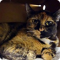 Adopt A Pet :: Sherry - Fairfield, CT