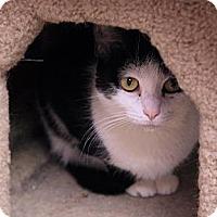 Adopt A Pet :: Abbie - Tempe, AZ