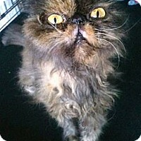 Adopt A Pet :: Czarina - New Port Richey, FL