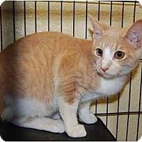 Adopt A Pet :: Chip - Modesto, CA