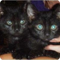 Adopt A Pet :: Jilly & Tilly - Kensington, MD