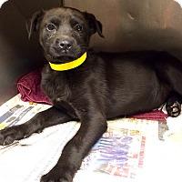 Adopt A Pet :: Emma - Westminster, CO