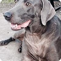 Adopt A Pet :: Conrad - Houston, TX