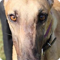 Adopt A Pet :: PJ In Due Time - Longwood, FL