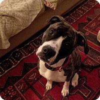 Adopt A Pet :: TRINITY - Kimberton, PA