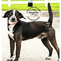 Adopt A Pet :: Hinto - Georgetown, OH