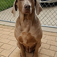 Adopt A Pet :: Marly - Grand Haven, MI
