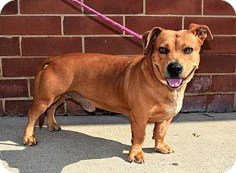 Pit Bull Terrier Mix Dog for adoption in Mooresville, North Carolina - Boris