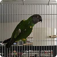 Adopt A Pet :: Les - Punta Gorda, FL