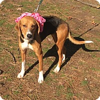 Adopt A Pet :: Darla - Voorhees, NJ