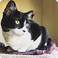 Adopt A Pet :: Muffin - Worcester, MA