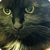 Adopt A Pet :: Bugsy - Laguna Woods, CA