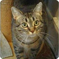 Adopt A Pet :: Cindy - Stuarts Draft, VA