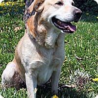 Adopt A Pet :: Jackson - Santa Ana, CA