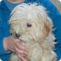 Adopt A Pet :: Claire ADOPTED!! - Antioch, IL