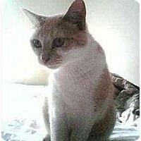 Adopt A Pet :: Betty - Proctor, MN
