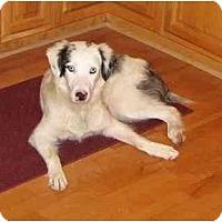 Adopt A Pet :: Crystal - Orlando, FL