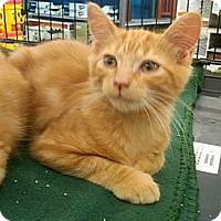 Adopt A Pet :: Richie - Sterling Hgts, MI