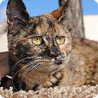 Adopt A Pet :: Tortellini - Palmdale, CA