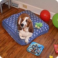 Adopt A Pet :: Sampson - Columbia, SC