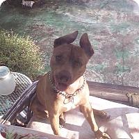 Adopt A Pet :: DIAMOND - Hollywood, FL