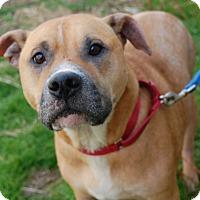 Adopt A Pet :: Patch - Wilmington, DE
