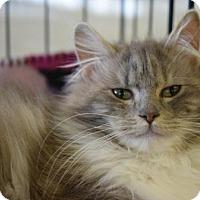 Adopt A Pet :: Barbara Ann - DFW Metroplex, TX