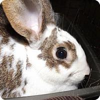 Adopt A Pet :: Ramona - Oxford, MS