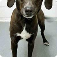 Adopt A Pet :: Buddy - Channahon, IL