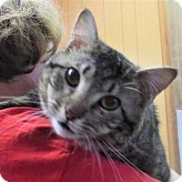 Adopt A Pet :: Patrick - Reeds Spring, MO