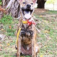 Adopt A Pet :: Dinah - Castro Valley, CA