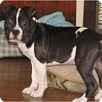 Adopt A Pet :: Prince - CHESTERFIELD, MI