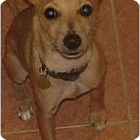 Adopt A Pet :: Petey - Miami, FL