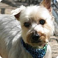 Adopt A Pet :: Sae - Madison, WI