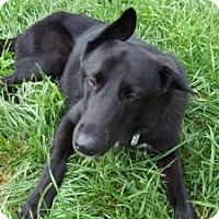 Adopt A Pet :: Flip - Matthews, NC