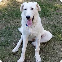 Adopt A Pet :: Tess  *Adopted - Tulsa, OK