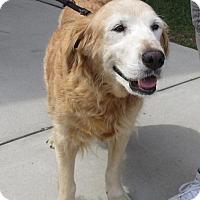 Adopt A Pet :: Dixie #3 - Murrells Inlet, SC