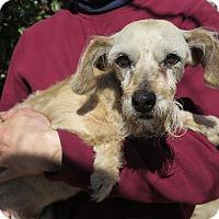 Adopt A Pet :: Mitzy - Tracy, CA