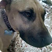 Adopt A Pet :: Penelope - Cary, NC