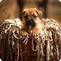 Adopt A Pet :: Ali - New Milford, CT