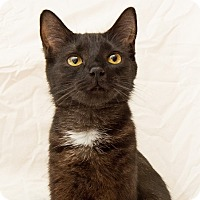 Adopt A Pet :: Mindy - Vancouver, BC