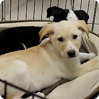 Adopt A Pet :: Finn - Regina, SK